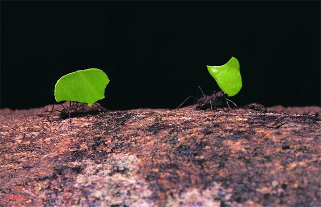 怎么防治蚂蚁危害