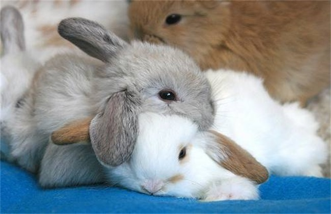 兔子感冒怎么办