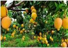 果树施肥注意事项