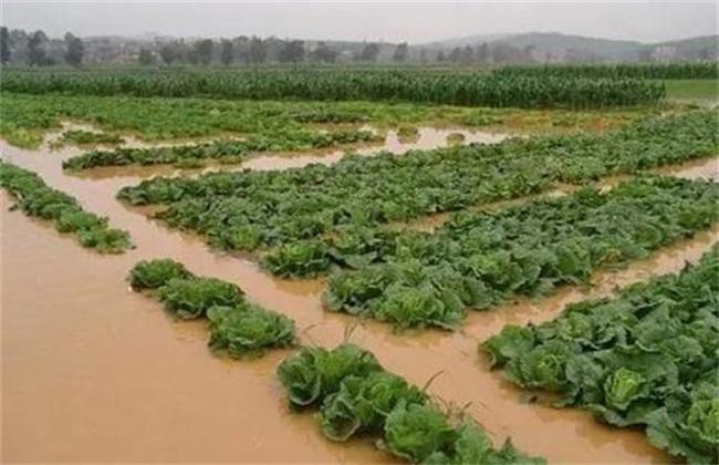 暴雨后蔬菜怎么管理