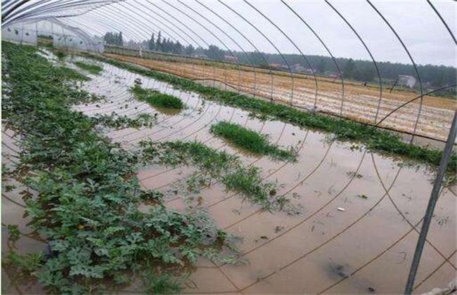 暴雨后 蔬菜 怎么管理