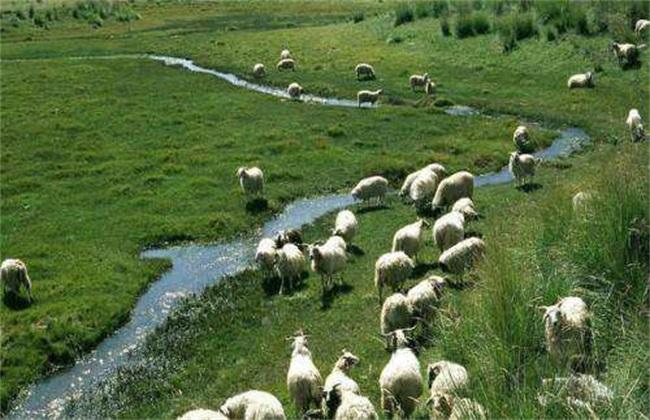 肉羊四季放牧管理