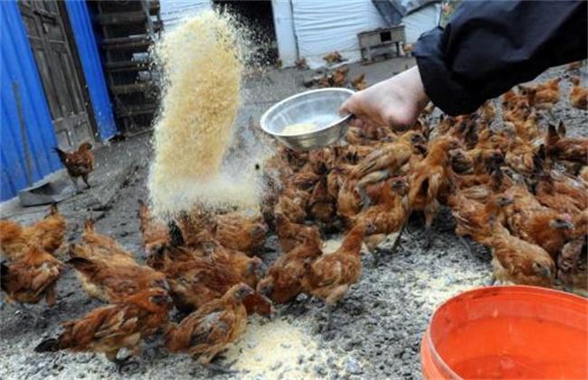 养鸡场饲料浪费原因及应对措施