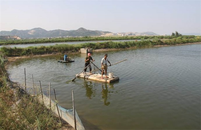 罗非鱼养殖管理