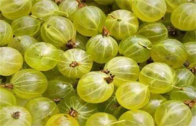 鹅莓多少钱一斤