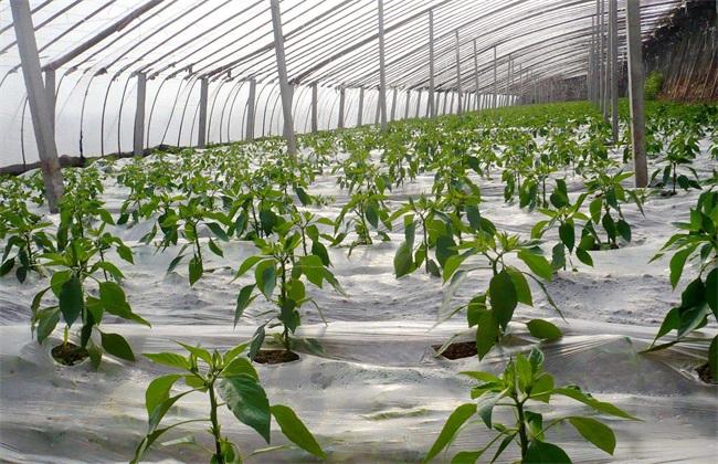 夏季蔬菜施肥时间和方法