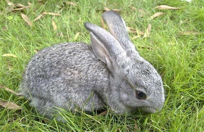 兔子不能吃什么