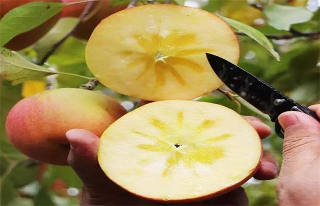 阿克苏苹果
