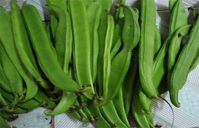 刀豆的高产种植技术