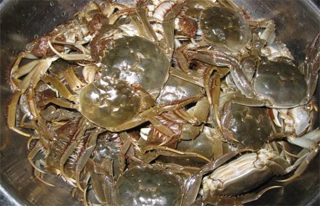 河蟹养殖的几大误区