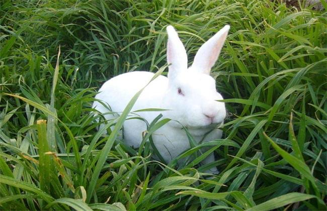 獭兔养殖四季管理要点