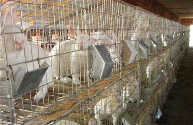 獭兔养殖 四季管理 獭兔管理