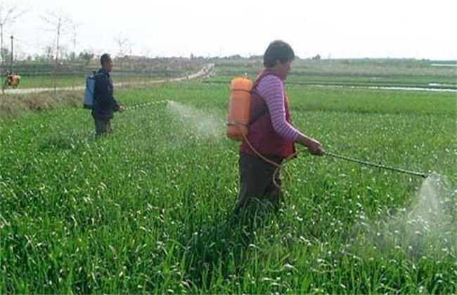 小麦叶面肥喷施要点