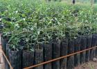农村种植苗木赚钱吗