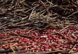 赤豆多少钱一斤