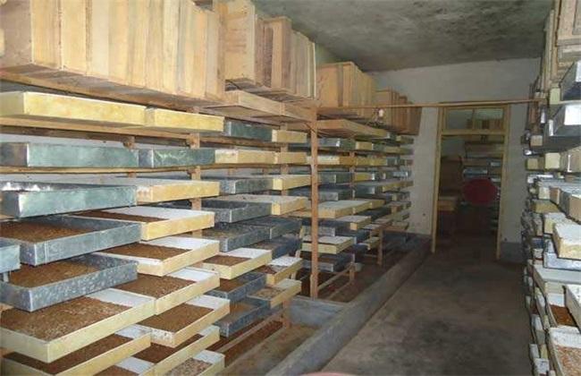 黄粉虫养殖技术的管理