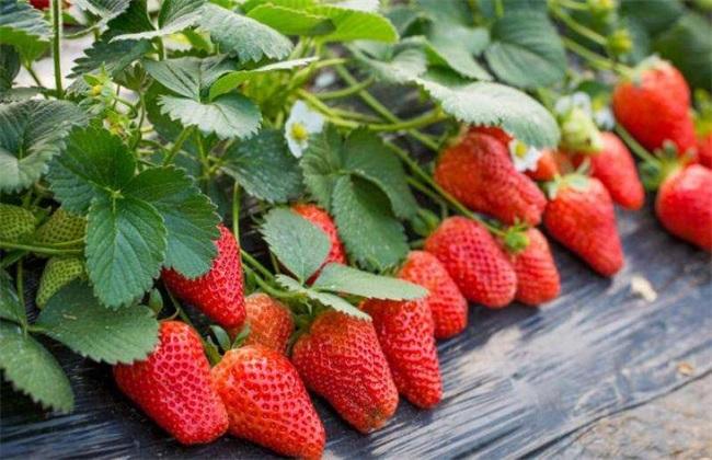 夏季适合种什么水果