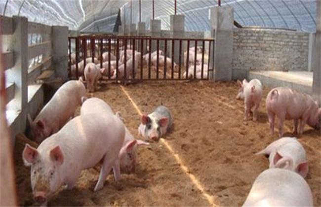 养猪场 无害化处理 无害养猪