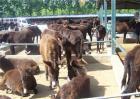 肉驴养殖该如何驱虫