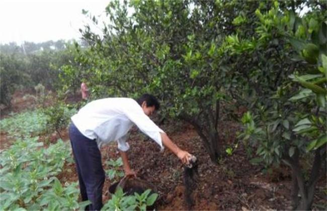 水溶肥施肥原则及方法