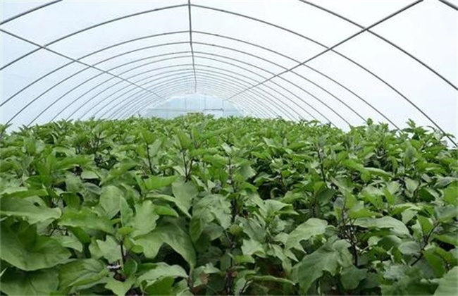 大棚蔬菜主要虫害的防治技术