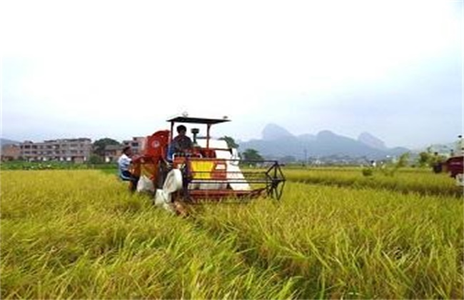 创业项目致富 农村创业项目