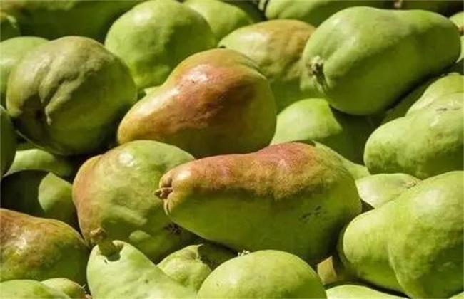 西洋梨的种植技术