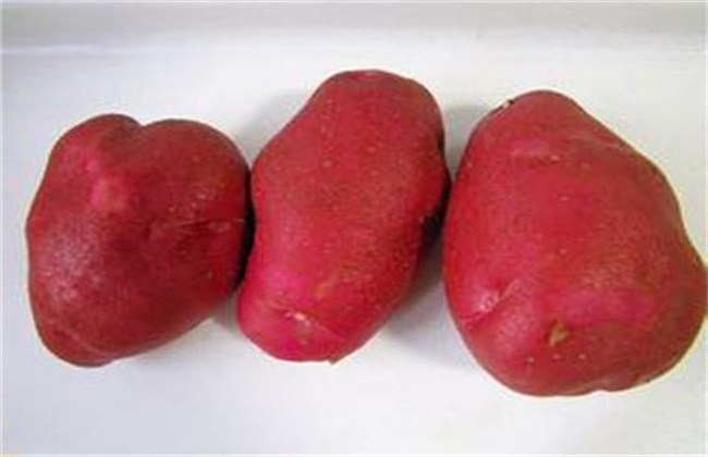 红土豆和白土豆的区别