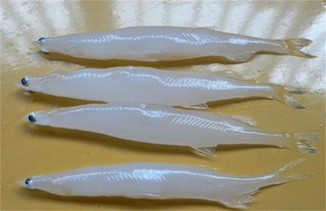 太湖银鱼多少钱一斤