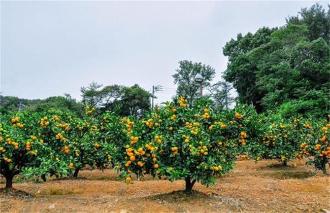 高温季节果园抗旱技术