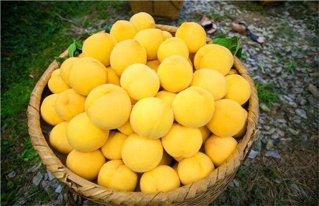 常见的桃子品种有哪些