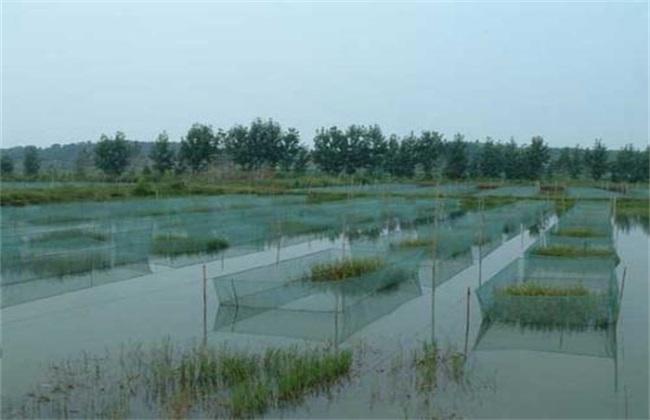 黄鳝夏季养殖方法
