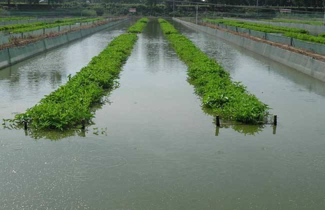 泥鳅的养殖条件