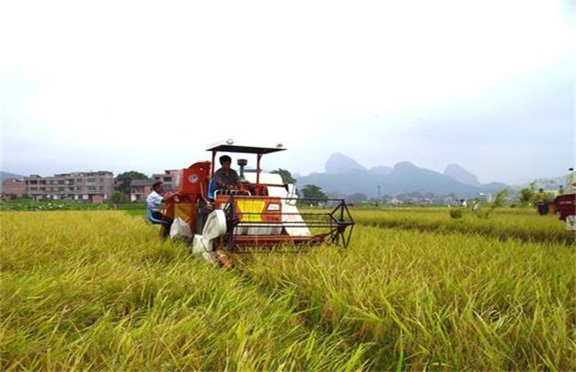 做什么生意赚钱 农村创业致富