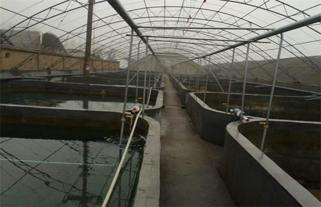 罗氏虾养殖方法