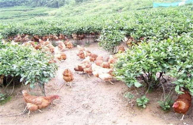 养殖业赚钱 养殖创业致富