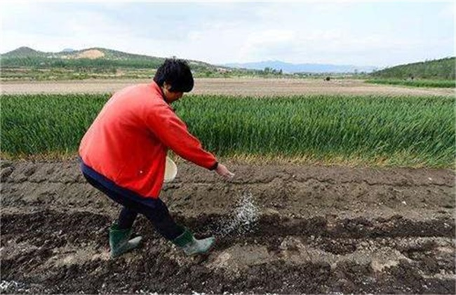 微量元素肥施用注意事项