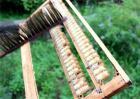 蜂王浆的营养价值及功效