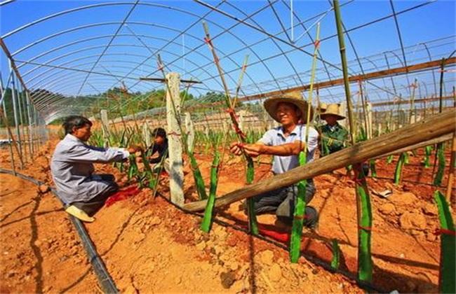 挣钱好项目 农村创业致富