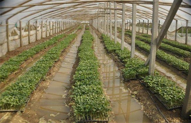 台风天气 蔬菜 怎么管理