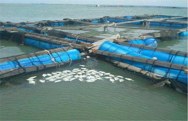 台风天气水产养殖应对措施
