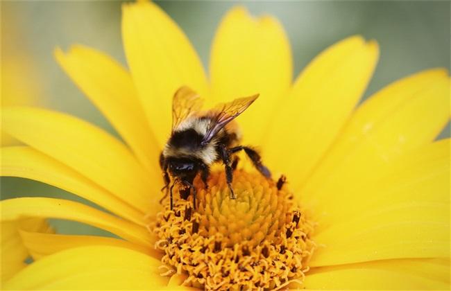 如何找到附近野生蜜蜂窝