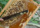 割蜜时怎样防止蜂群逃跑