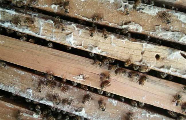 自然分蜂和人工分蜂哪个比较好