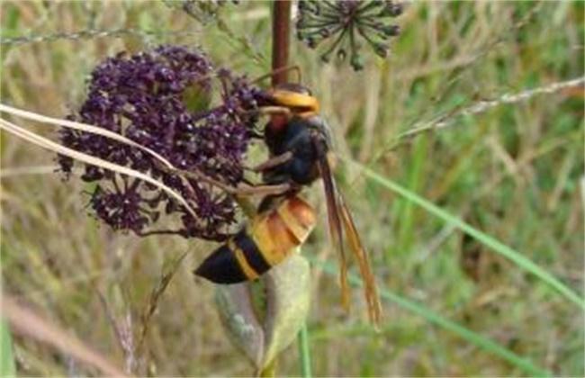 养蜂如何防止天敌胡峰