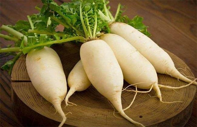 萝卜种植 萝卜怎么种植