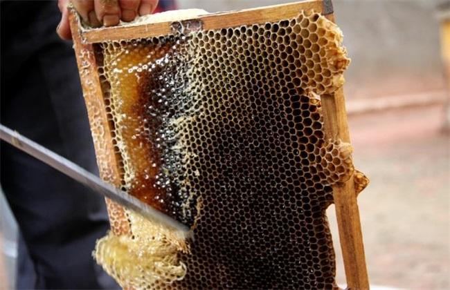 中蜂什么时候取蜜最佳