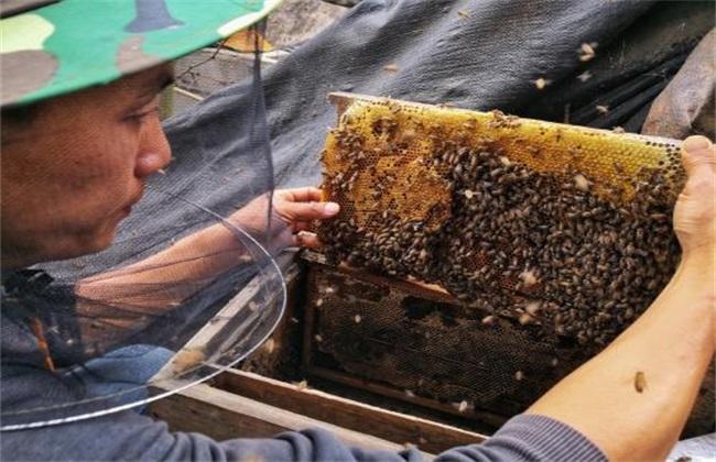 中蜂取蜜时间 什么时候取蜜好