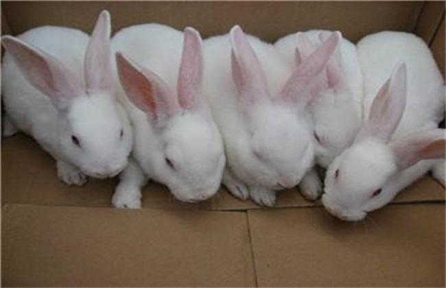 养殖兔子的方法