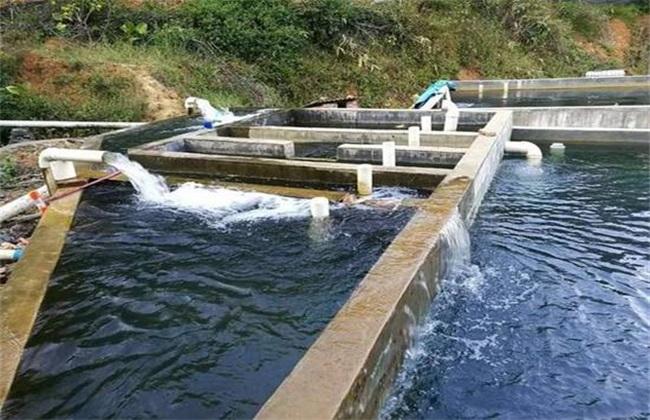 青鱼实用养殖技术